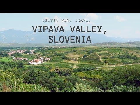Slovenian Wine - Rebula (Ribolla Gialla) From Vipava Valley