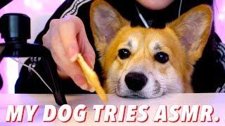 my dog tries ASMR... Crunchy Eating Sounds