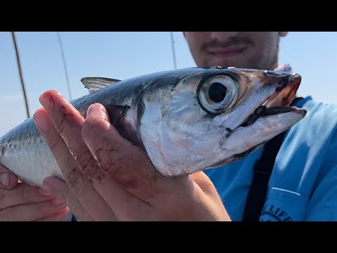 Fishing For Mackerel And Sea Bass Offshore New Jersey
