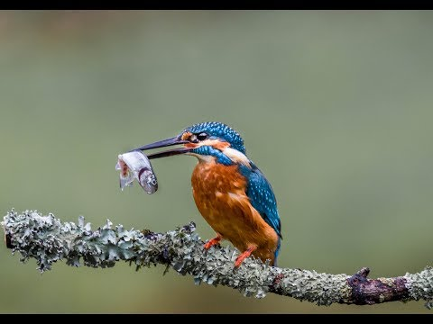 Landscape & Nature Photography. Photographing Kingfishers