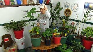 Indoor Gardening help for YOU!
