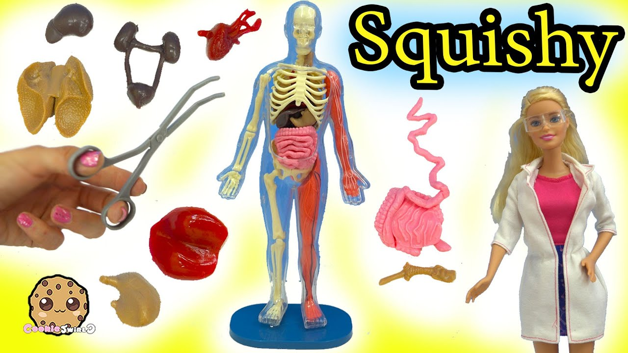 Squishy Human Body Parts With Scientist Barbie Teacher Student