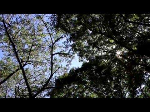 N Yokoyama BWV 1006 CP