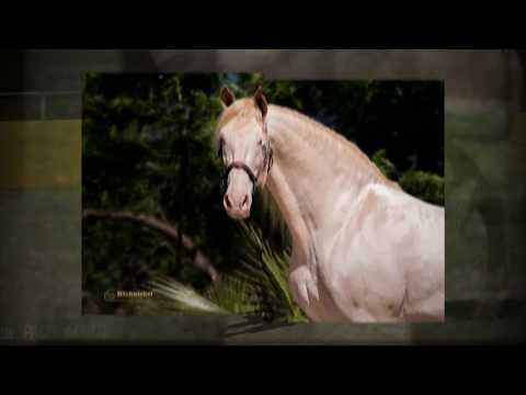 SPANISH HORSES FOR SALE - DIRECTLY FROM ANDALUSIAN HORSE BREEDER YEGUADA D