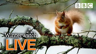 Cute wildlife cams UK 31 Jan 🦊❄️🐿 - BBC Winterwatch
