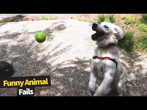 Try Not To Laugh Watching Funny Animal Fails Compilation | Best Animal Videos