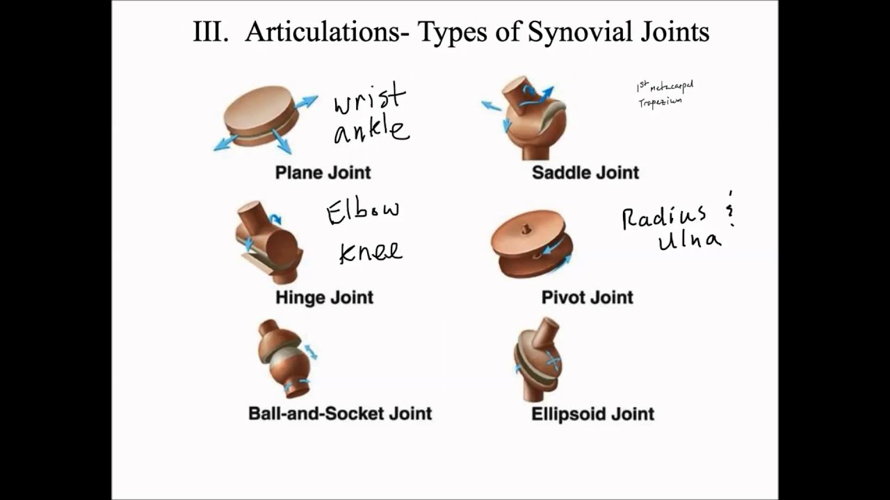Types of Synovial Joints - YouTube