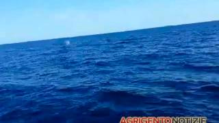 VIDEO | Le balene al largo di San Leone (Agrigento)((www.agrigentonotizie.it) La raccontano agli amici come