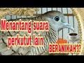 Pancingan Suara Perkutut Lokal Menantang Lawan Ampuh Nyautt  Mp3 - Mp4 Download