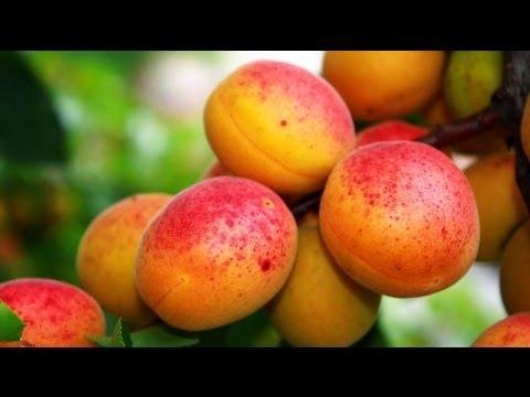 Top 6 Health Benefits of peaches | Peach fruit - YouTube