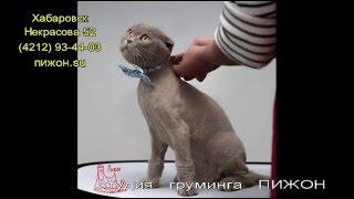 Стрижка кошек Хабаровск(, 2016-04-23T08:30:30.000Z)