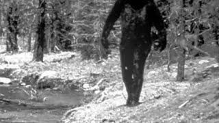 UNEXPLAINED Creatures Caught on Camera!