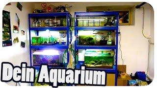 Max' Aquarienregal   Dein Aquarium