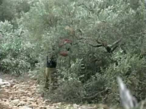 Israel Goverment Confiscate Palestinian Land