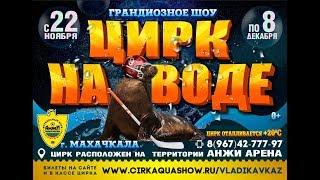 Цирк На воде Махачкала с 22 ноября по 8 декабря 2019
