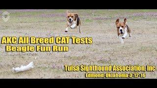 AKC All Breed CAT Tests-Beagle Fun Run-Tulsa Sighthound Association-Edmond, Oklahoma 3-12-16