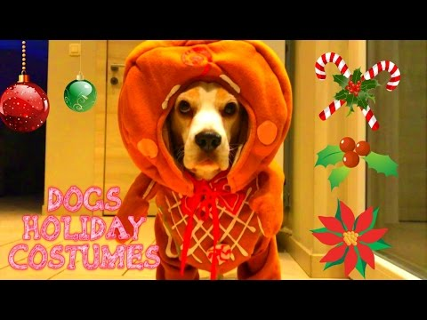 Cute Dogs In Holiday Costumes...Gingerbread Dog!