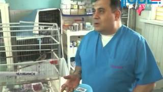 В клинике доктора Карена Даллакяна спасли жизнь двум птицам и собаке.