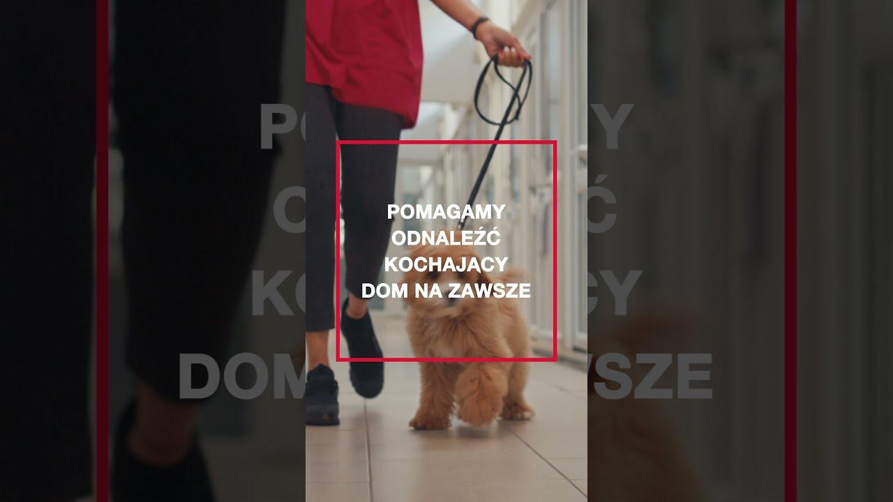 Purina dba tu i tu. | Odpowiedzialne adopcje psów i kotów