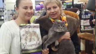 Главная кошка Севастополя