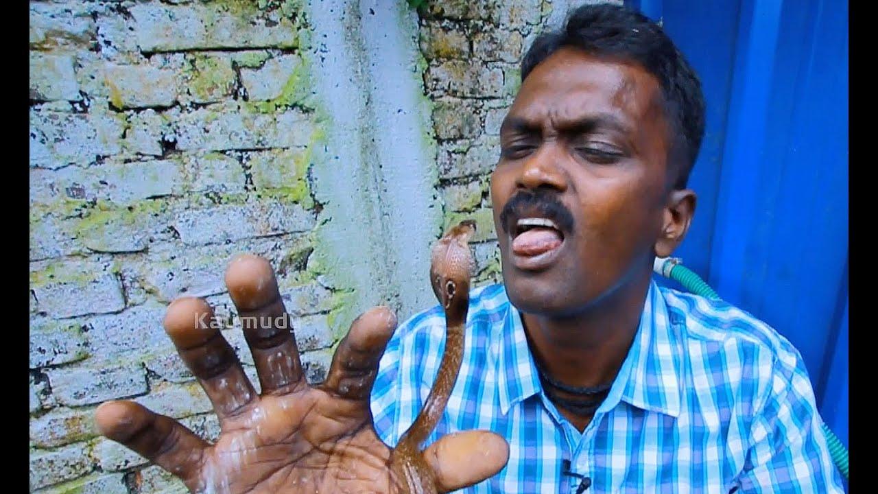 Vava Suresh Capturing Three Cute Little Cobra Babies