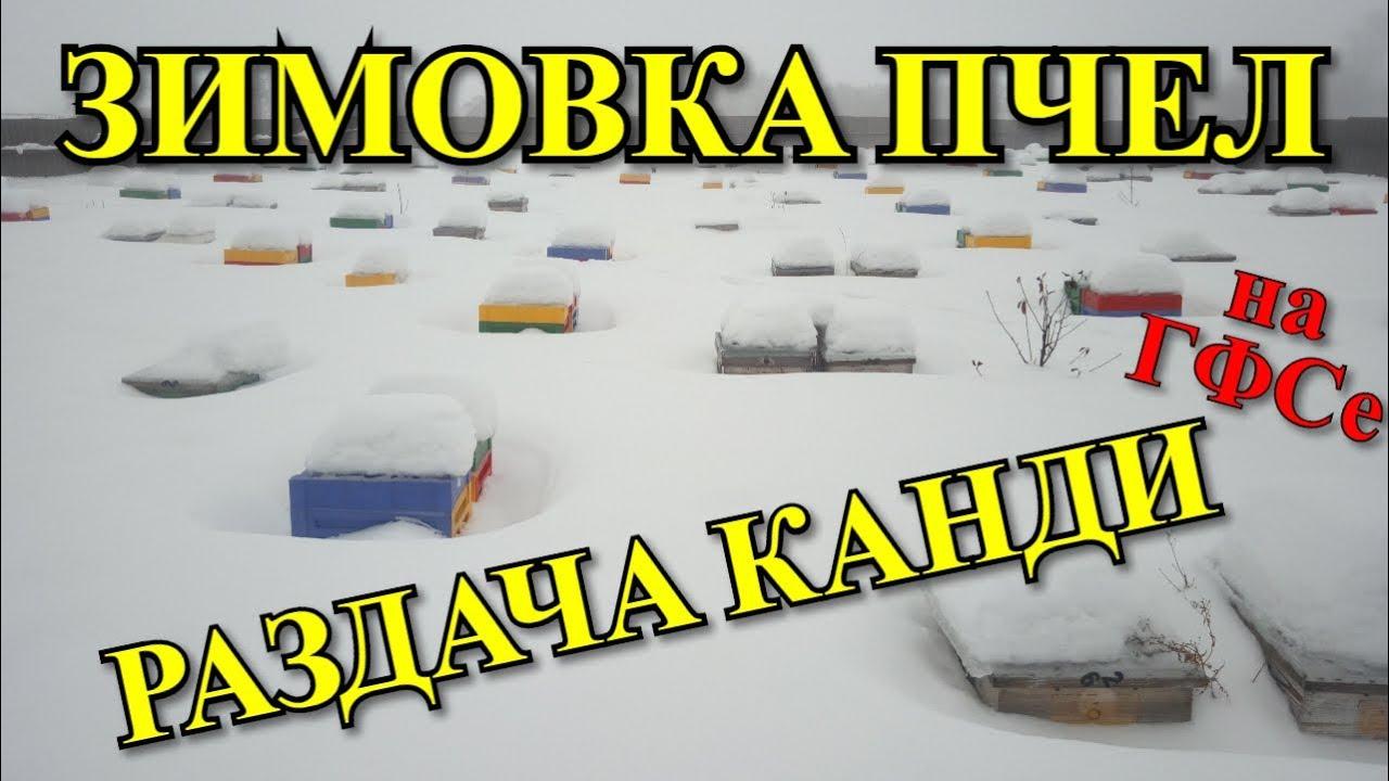 Зимовка пчел на ГФСе. Раздача канди / FABRO