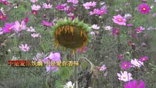 吳晉淮//可愛的花蕊