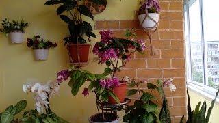 По запросу Ольги Фео Мой балкон, имитация кирпичной кладки и мои цветы.