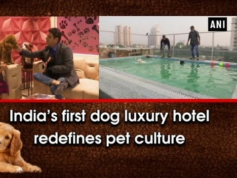 India's first dog luxury hotel redefines pet culture - Haryana News