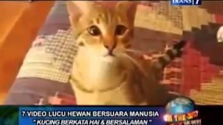 Begini Nih Jika Kumpulan Kucing Bisa Ngomong Kayak Manusia