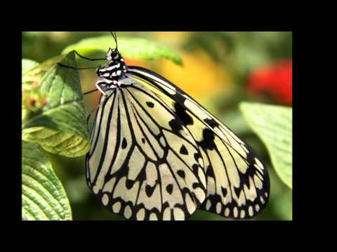 Fragile Majesty of the Butterfly