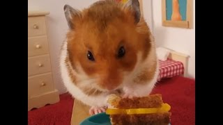Little Hamster Loves To Eat Different Foods