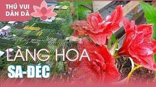 0754 Làng Hoa Sa Đéc Khoe Sắc Đón Tết 2018 l Tết Tết Tết...sắp đến rồi!!!!  Flowers For Spring