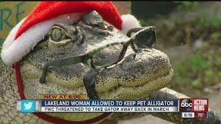 lakeland woman allowed to keep pet alligator