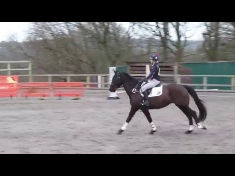 Petley Wood Arena Eventing