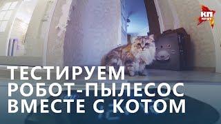 Тестируем робот-пылесос с котом