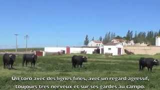 Retour en France des toros de Juan Luis Fraile y Martin