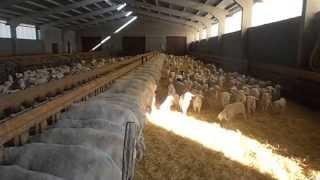 assaf corderos