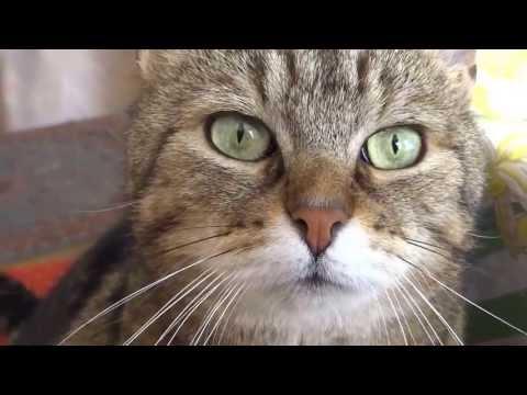 la chatte qui tchatche.....