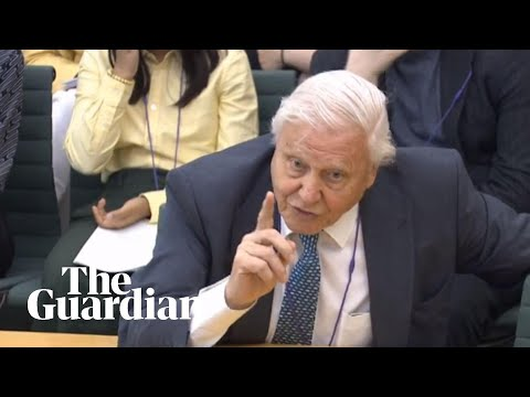 David Attenborough speaks in parliament about climate change – watch live