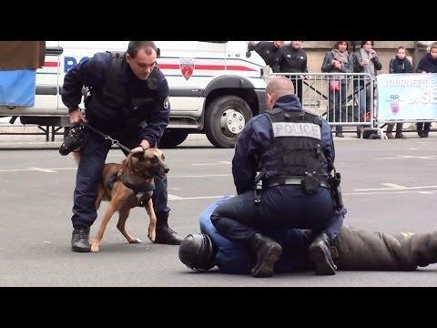 Les chiens de la police   Doovi