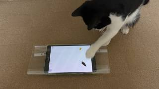 Cat Playing Mouse Game On Tablet - 4K Ultra HD 2160p Video