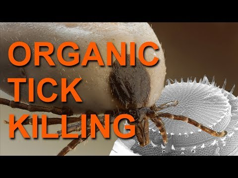Killing Ticks With Diatomaceous Earth - An Organic Method