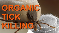 Killing Ticks With Diatomaceous Earth - An Organic Method