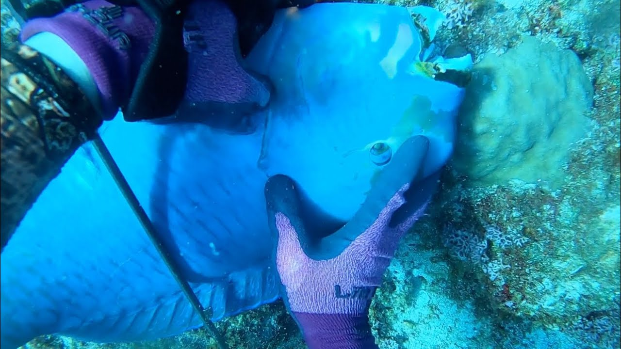 海底10mで血抜きをすると衝撃の結果に…