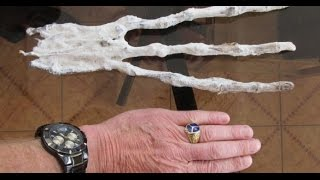 Strange Three Fingered Alien Looking Hand Found in Peru