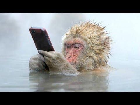 Monyet Jaman NOW Main Gadget Wkwkwk - Compilation