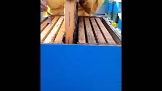 priprema za uzimljavanje pcelinjih drustava
