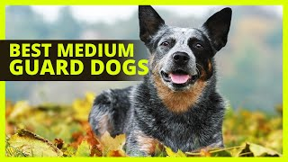 BEST MEDIUM GUARD DOGS | Top 8 breeds of guard dogs for families