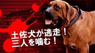 土佐犬が檻から逃走し、3人がかまれて負傷する事件が兵庫県高砂市で発...